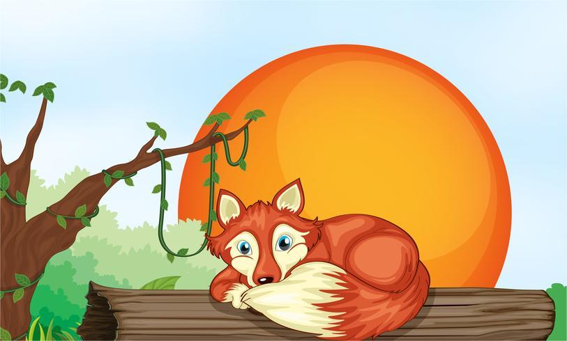 fox resting on wood