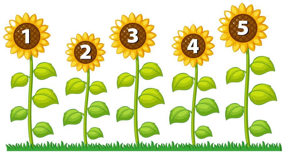 Nummer één tot vijf op zonnebloemen vector