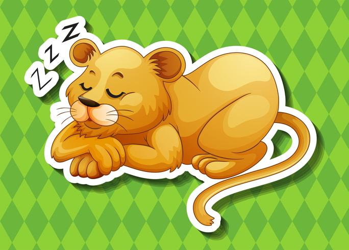 Lion cub sover ensam