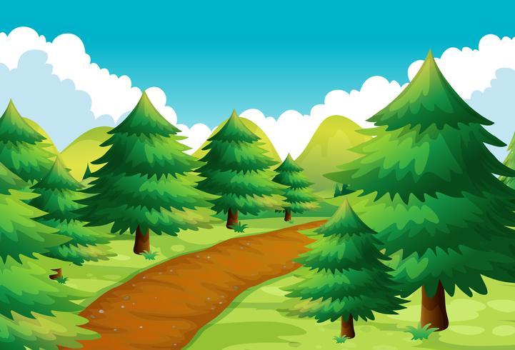 Scena della natura con pista e pini