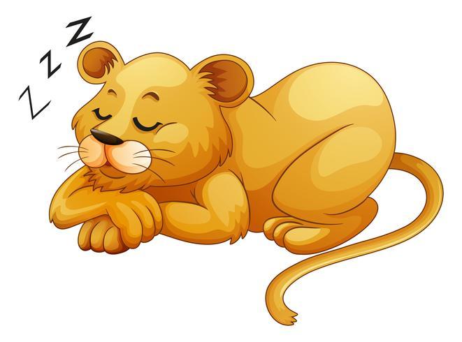 Cute lion sleeping alone