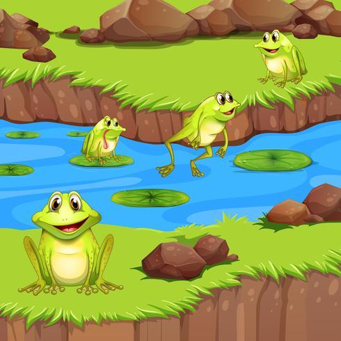 Flogs viviendo en el estanque del río