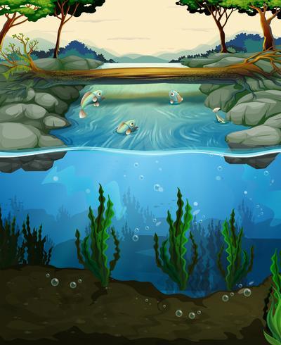 Scène avec poisson nageant dans la rivière vecteur