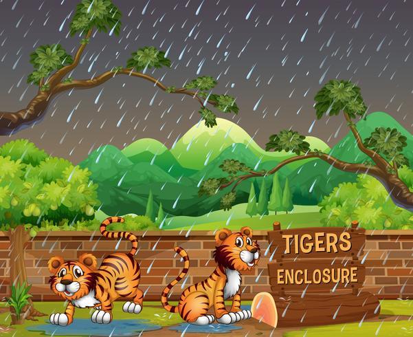 Tigri felici nello zoo vettore