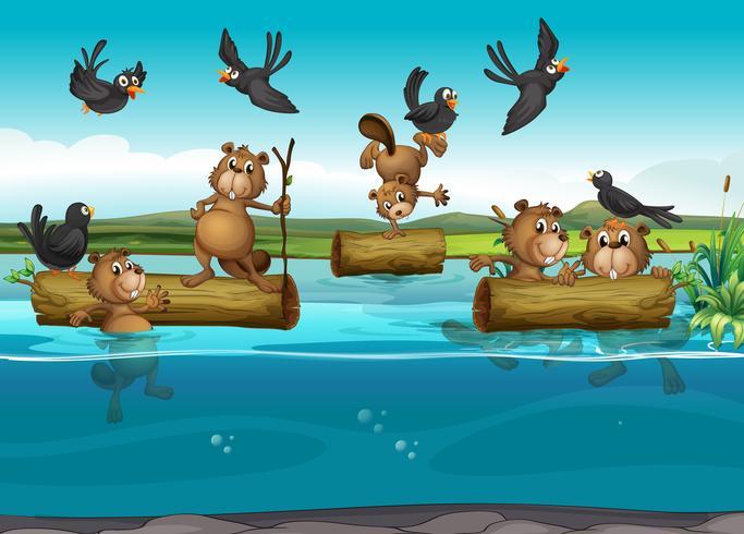 Castores y aves en el rio