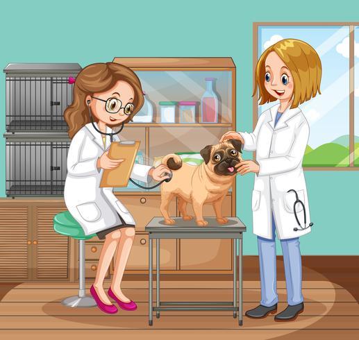 Médicos veterinários ajudando um cão vetor