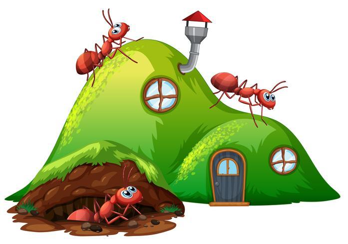 Casa de formiga de buraco subterrâneo vetor