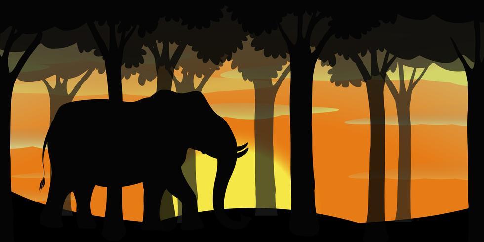 Achtergrondscène met silhouetolifant in bos