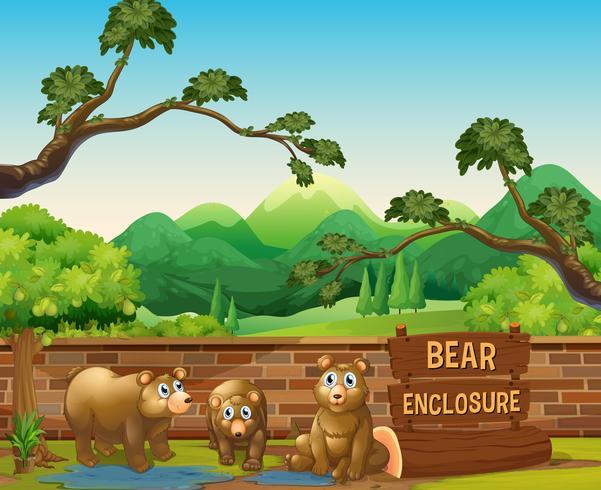 Three bears in the opened zoo