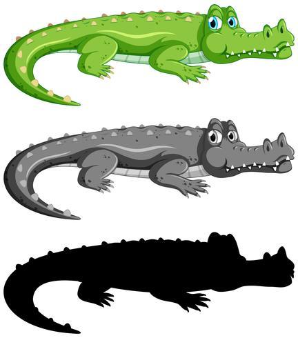 Sats med krokodil på vit bakgrund