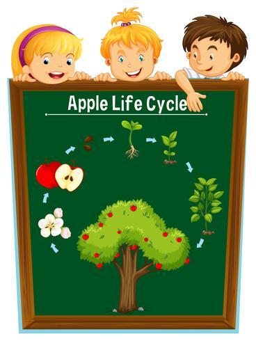 Miúdos que olham o ciclo de vida da maçã