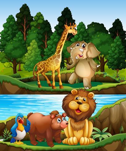 Wilde dieren aan de rivier