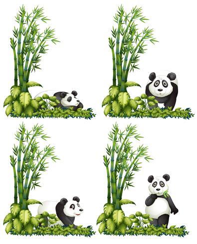Panda y bambu