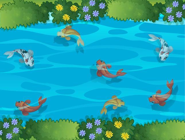 Fische schwimmen in einem Bach