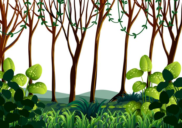 Bosscène met groene bomen