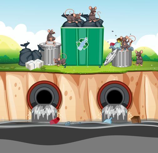 Ongezonde afvalverwijdering met Rat vector
