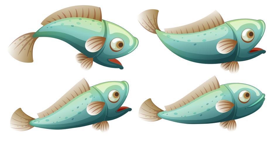 Een reeks vissen op whitrachtergrond