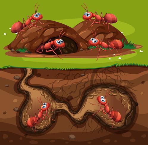 Um grupo de formigas trabalhando no buraco