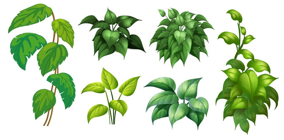 Eine Reihe von grünen Pflanzen
