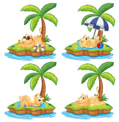 Set faule Katze auf der Insel
