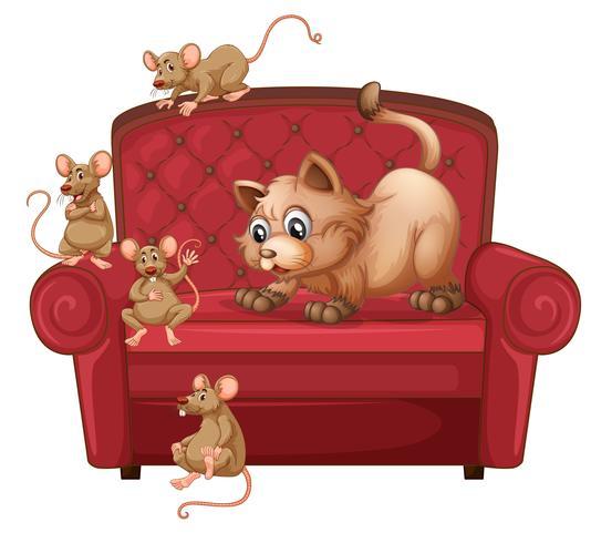 En katt och råttor på soffan
