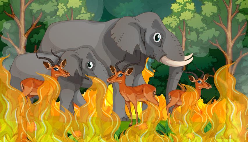 Wild animals in wildfire forest