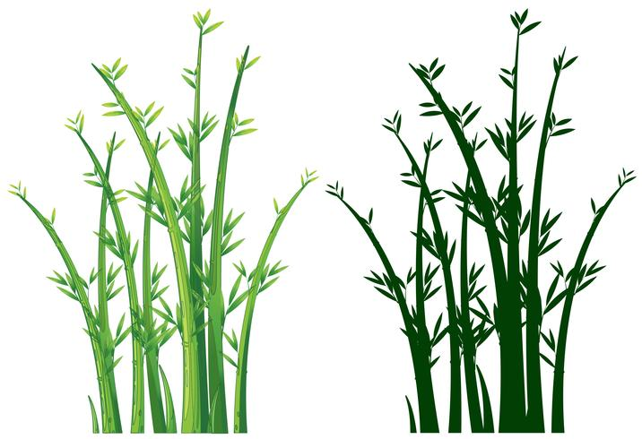 Bamboo trees in green
