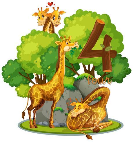 Quatre girafes dans la nature