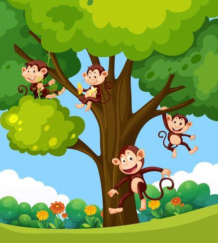 Apa som spelar på trädet