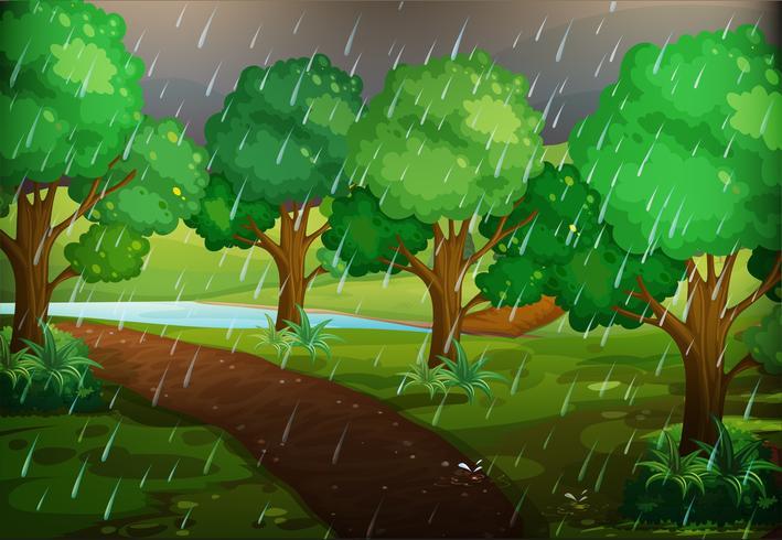 Cena de floresta em dia chuvoso
