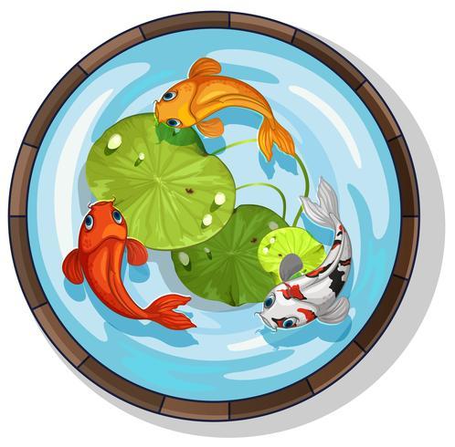 Drei Kois schwimmen in einem kleinen Pool