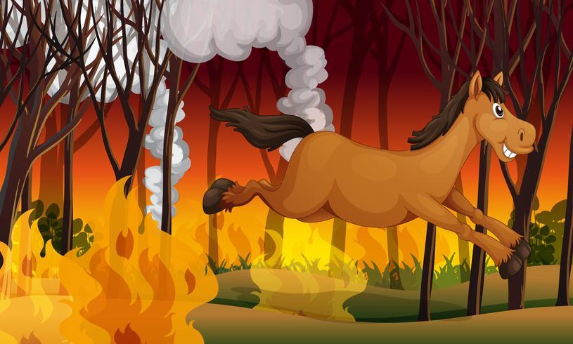 Horse running away from a fire vector