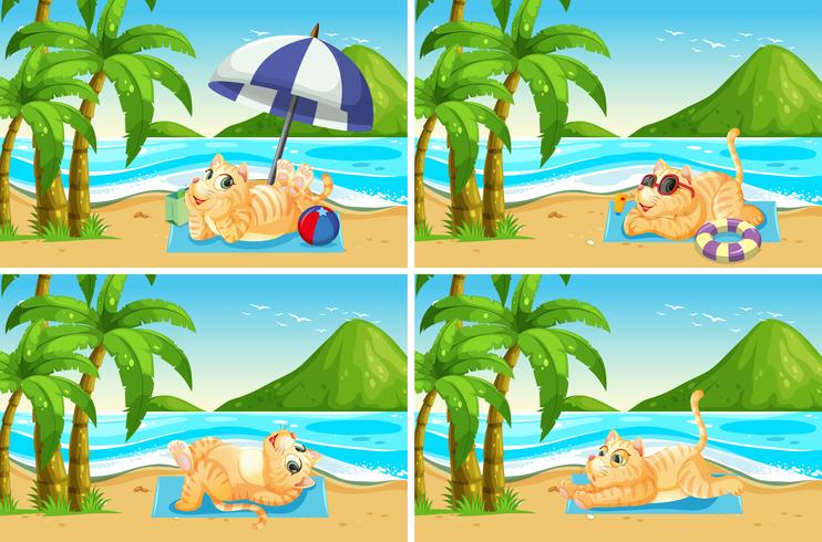 Set of cat at the beach