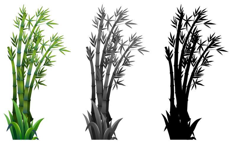 Set av bambu växt