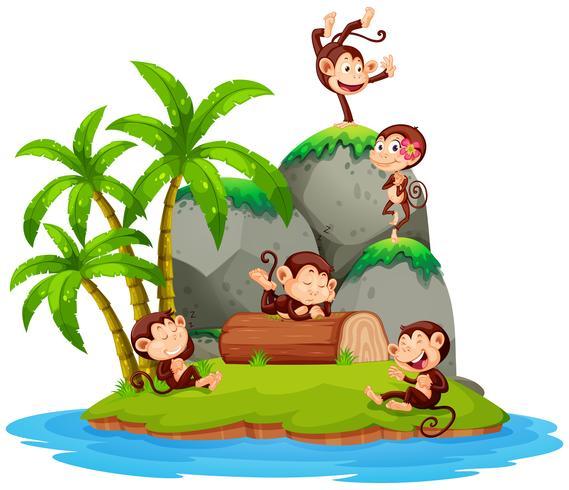 Apa på isolerad ö
