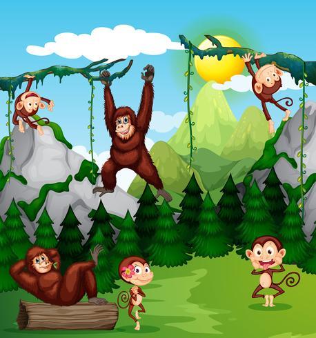 Macaco e chimpanzé na natureza