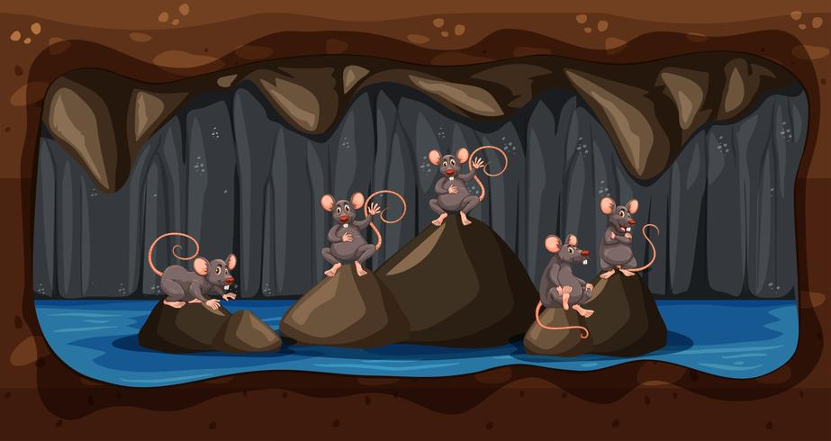 Une sale maison de rats souterrains