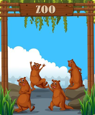 Lontras no zoológico