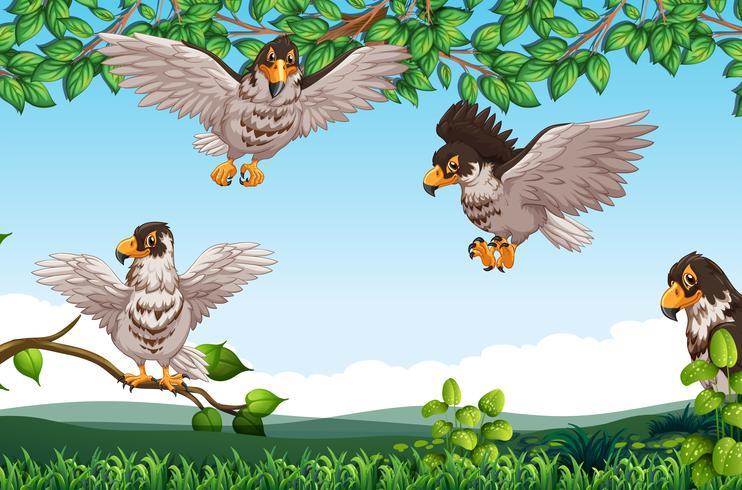 Muchos halcones en la naturaleza