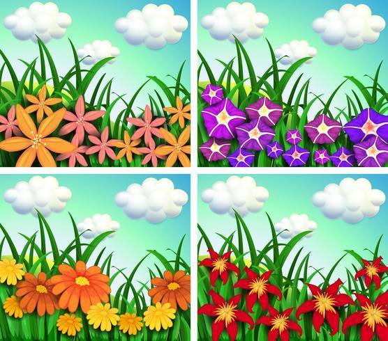 Quatre scènes de champs de fleurs