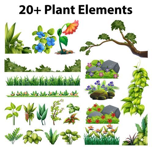 Différents types de fleurs et d'arbres