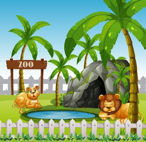 Lion mâle et femelle dans le zoo