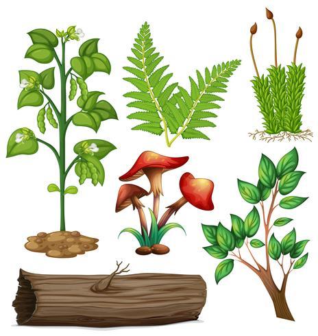 Diversi tipi di piante