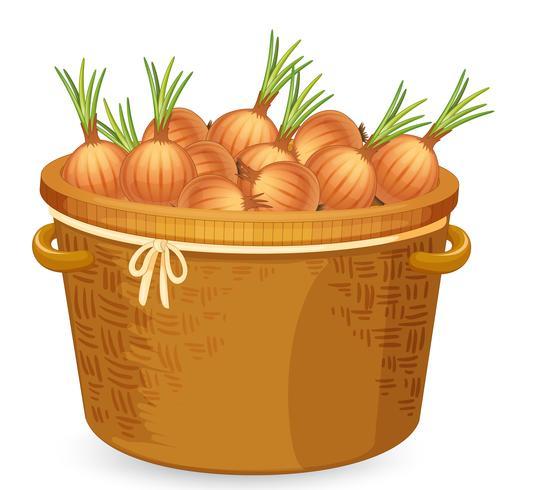 Un cesto di cipolle