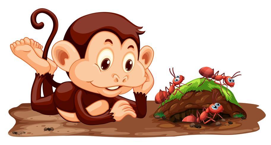 Un mono mirando hormigas