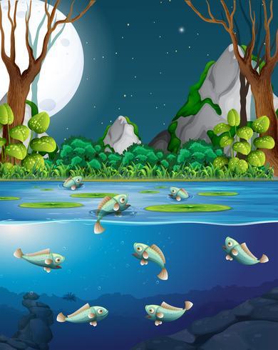 Peces en el río en la escena nocturna
