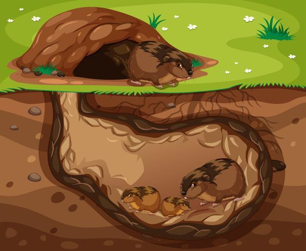 marsvinfamilj som bor underjordisk