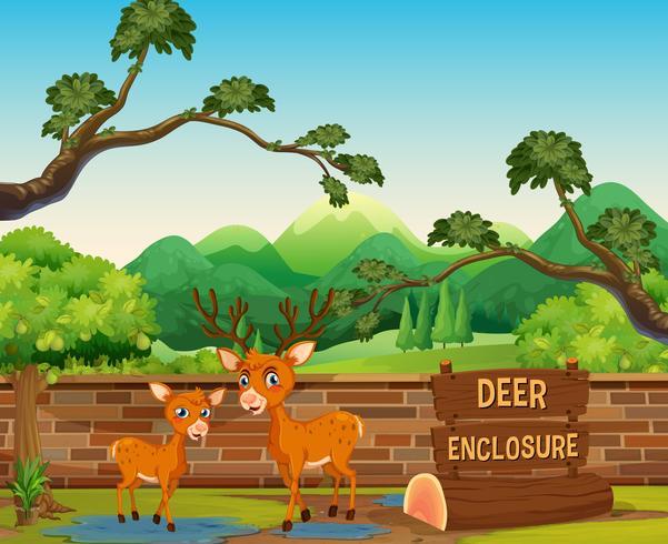 Two deers in the safari zoo