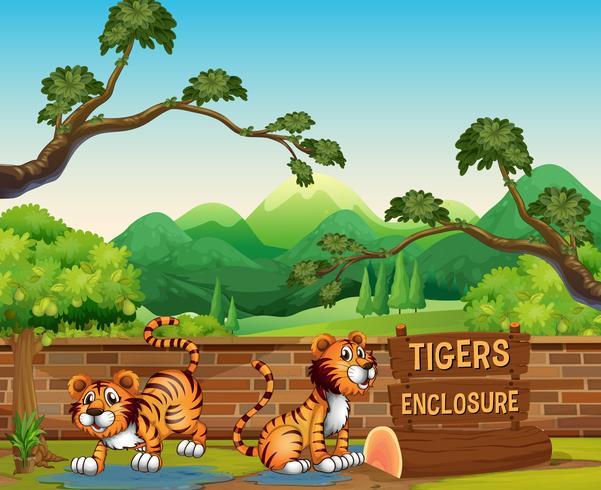 Scène de zoo avec des tigres au moment de la journée