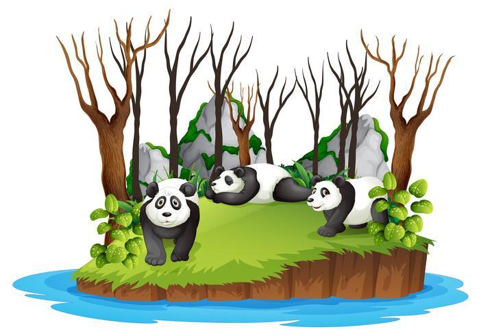 Panda dans la forêt sauvage